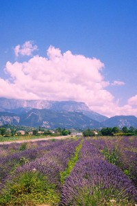 lavender & mountains